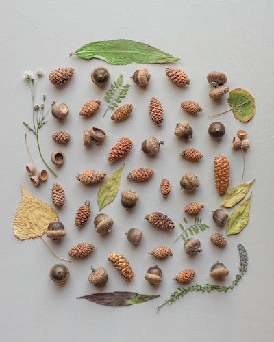 acorn nut in flatlay photography
