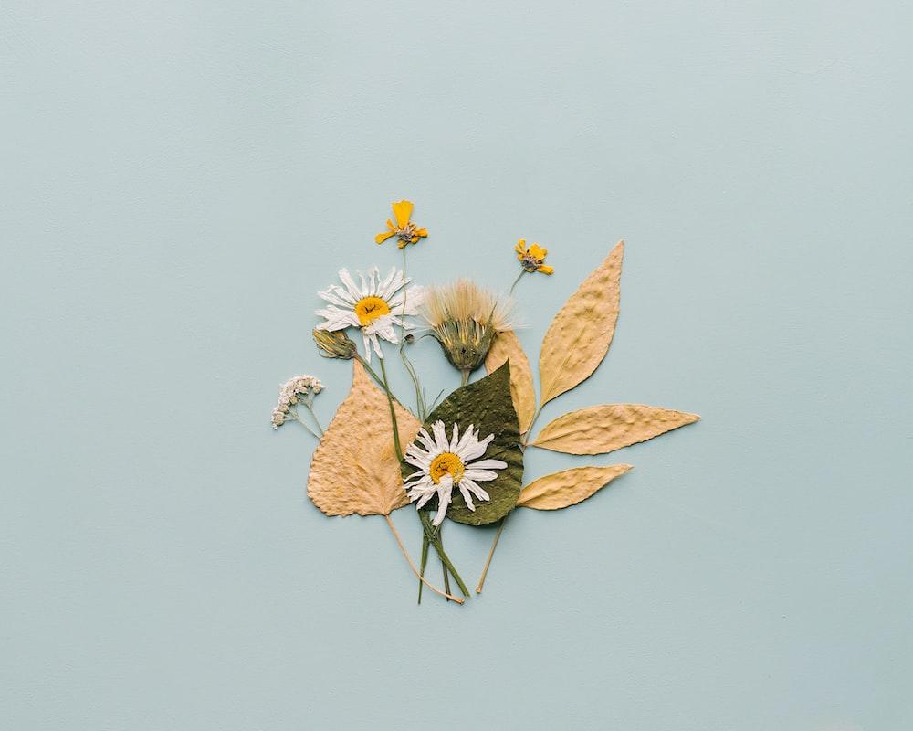 white daisy flowers illustration