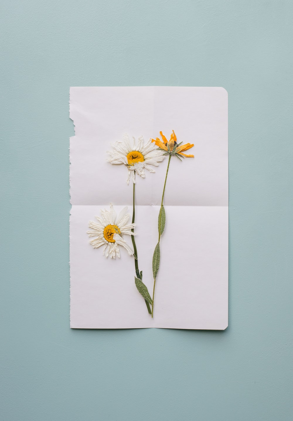 white and yellow daisy flowers handmade card