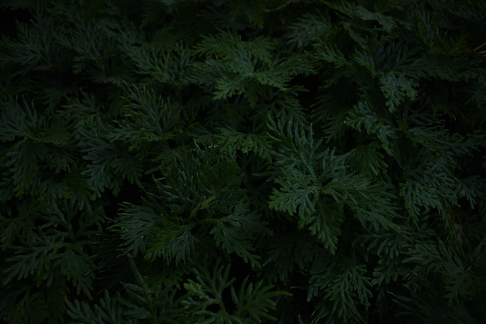 green leafed tree in closeup photography