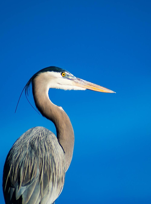 gray and white long-beak bird