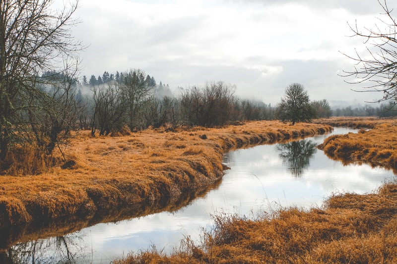 river beside trees
