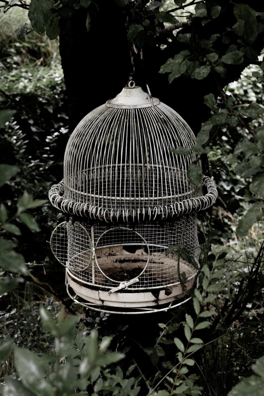white birdcage
