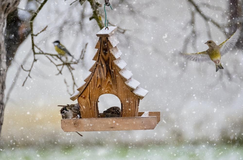 brown wooden bird house