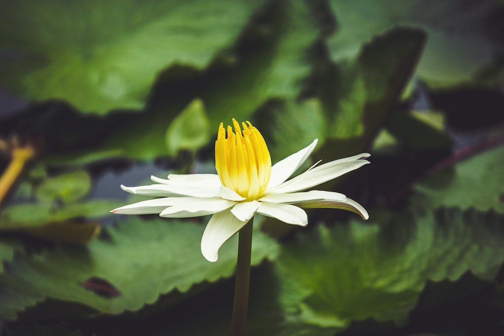 selective focus photography of white and yellow-petaled flower