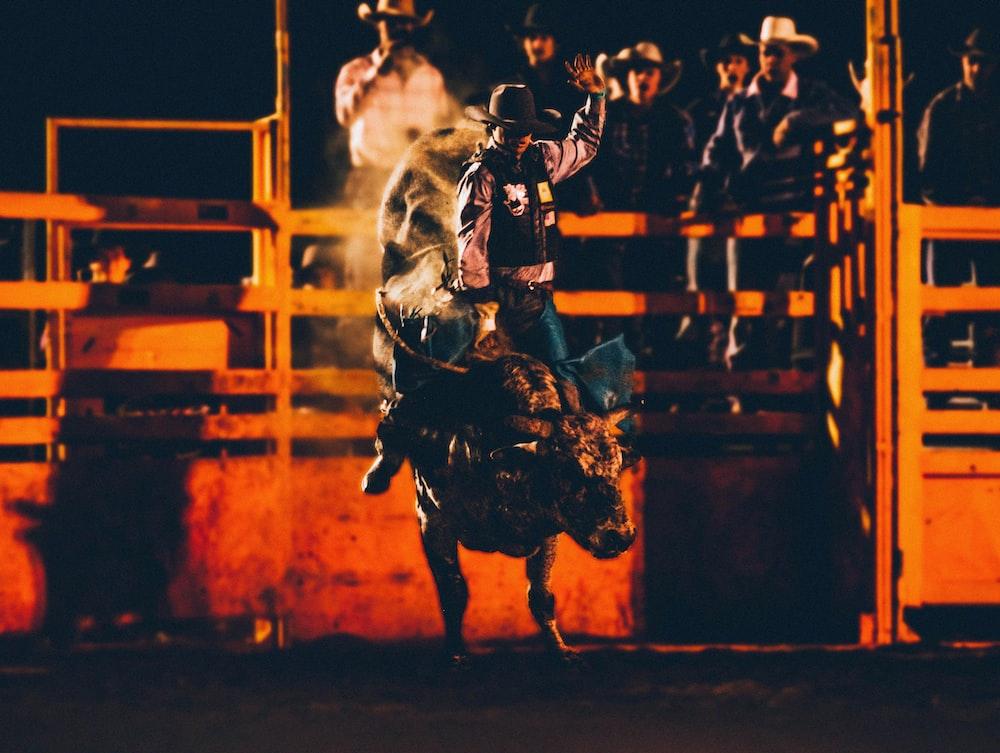 bull rider on park