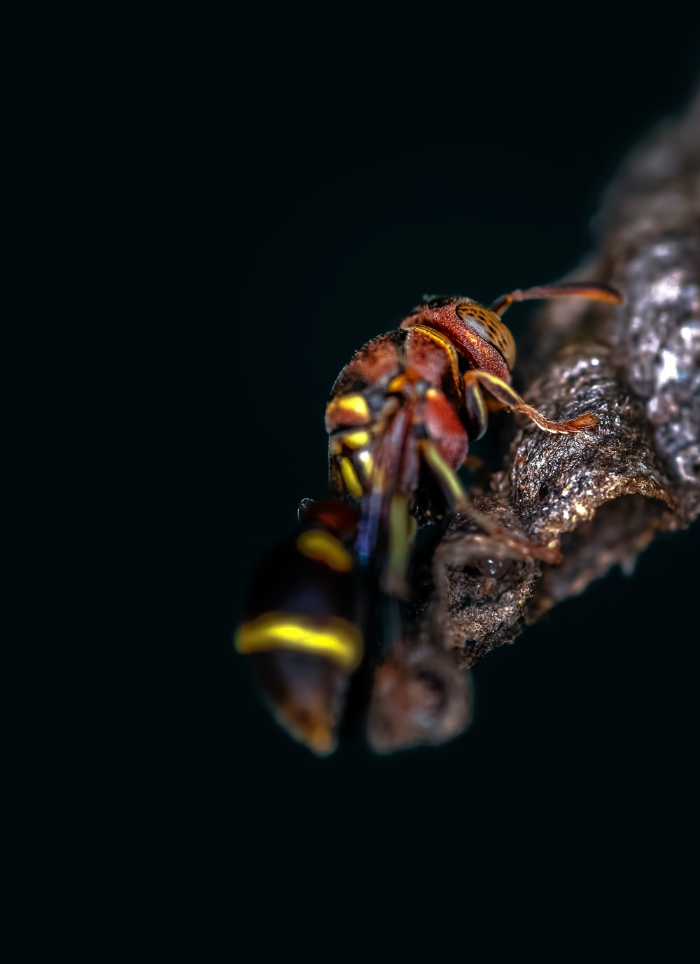 red and yellow wasp