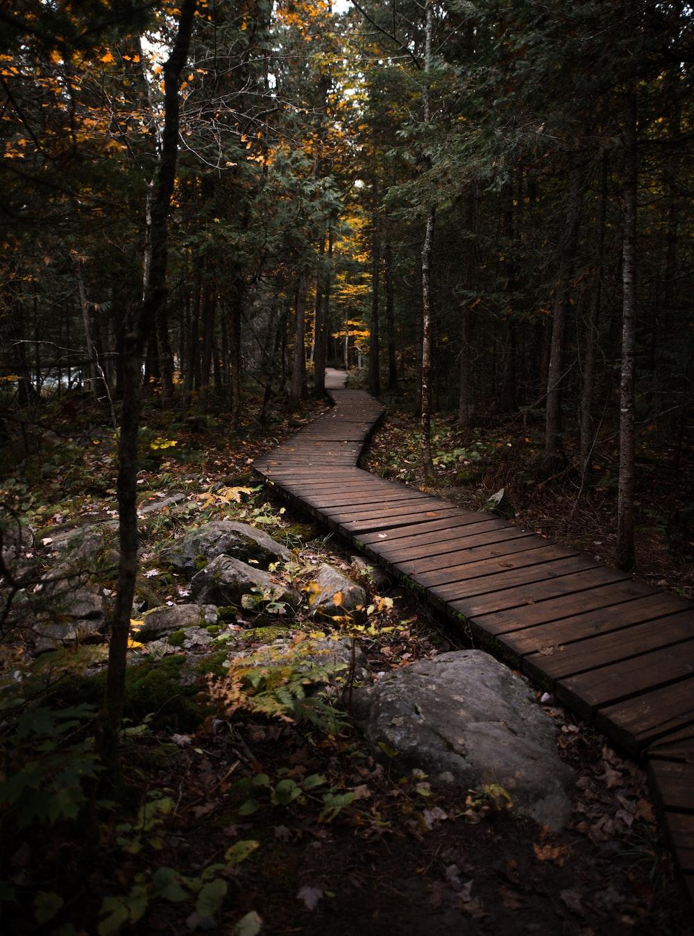empty pathway through the woods