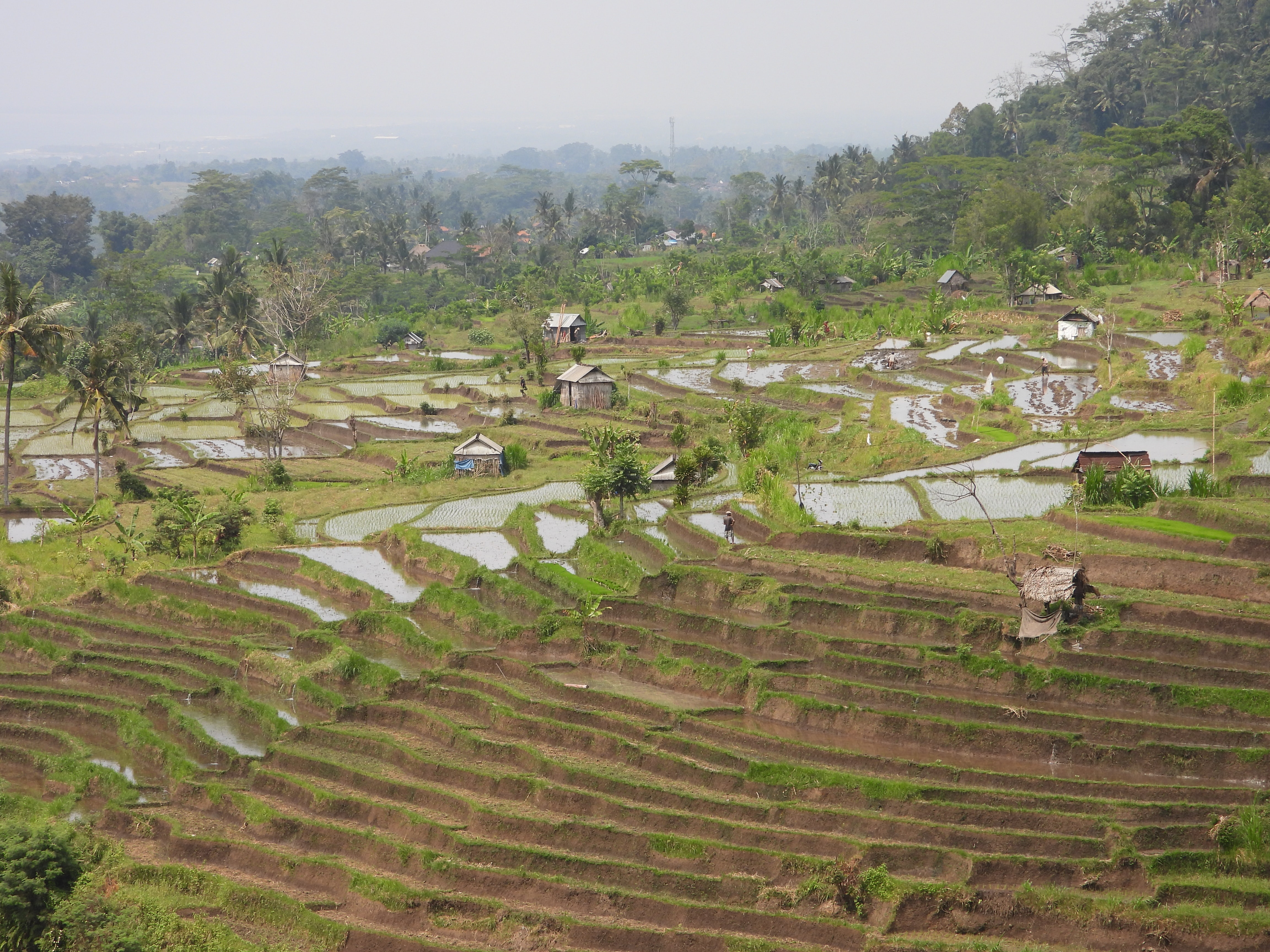 nature photography of rice terraces during daytime