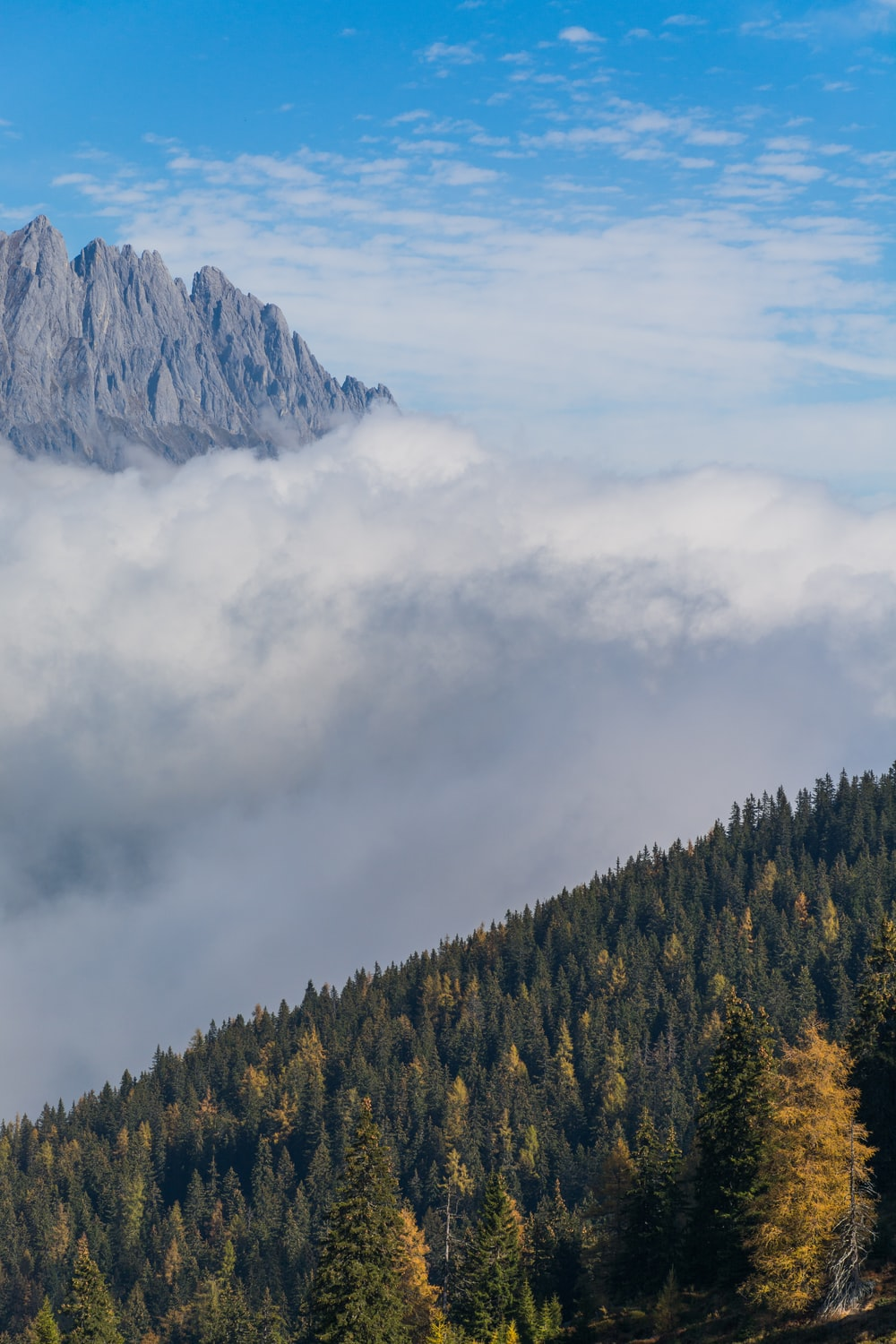 trees and mountain covered by cloud during daytime
