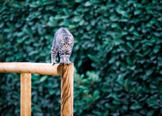 gray cat standing on brown wooden bar during daytime