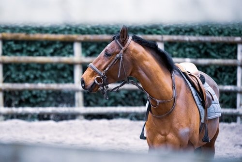Soin pour vos chevaux
