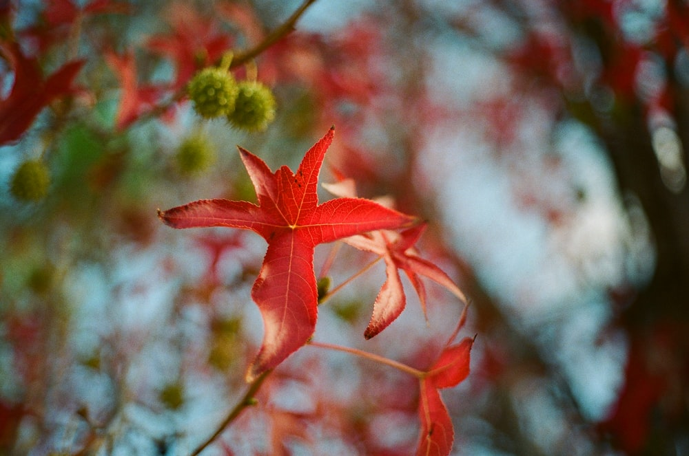 red petaled flower in close up photo