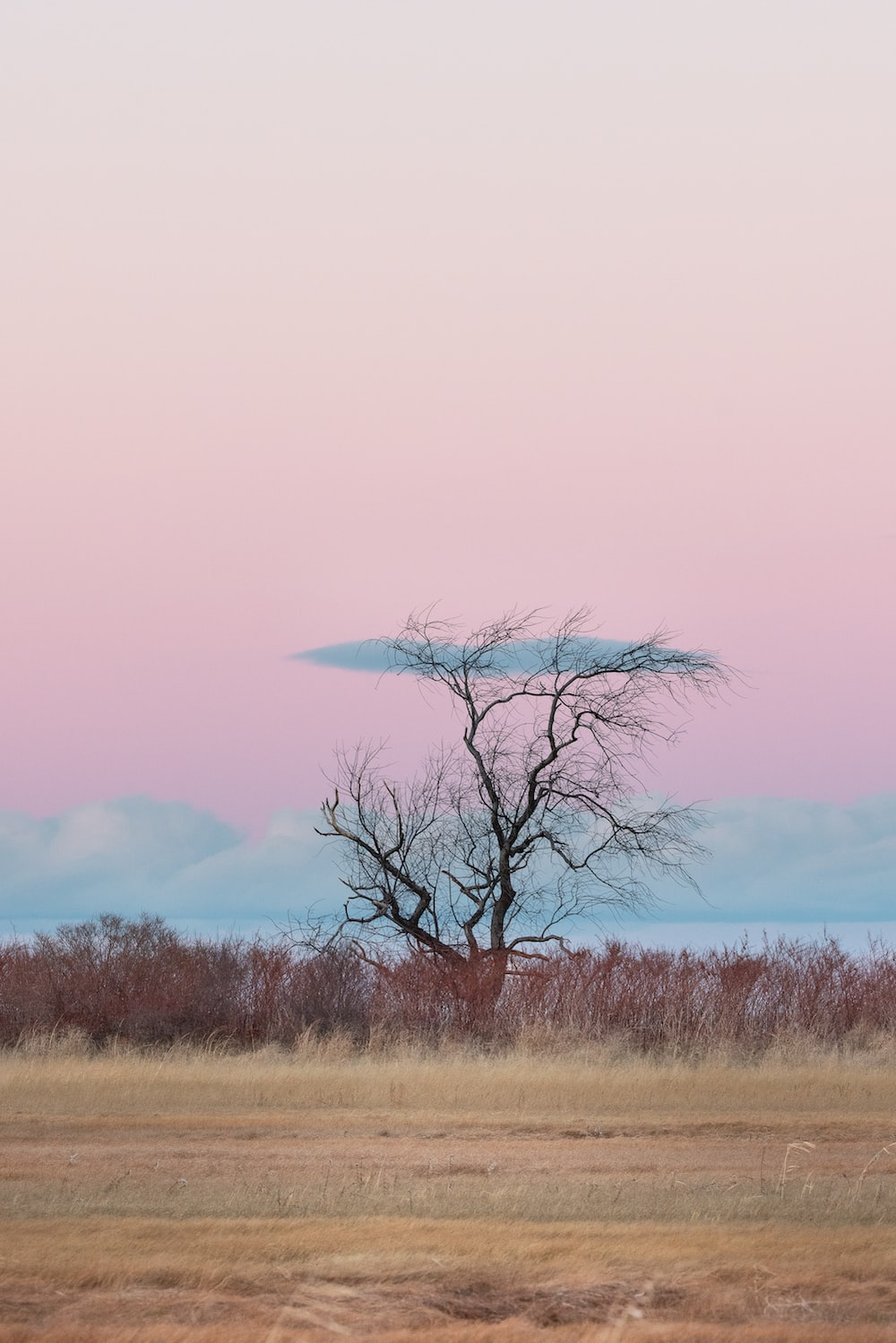 lone tall tree across brown grass field under pink sky