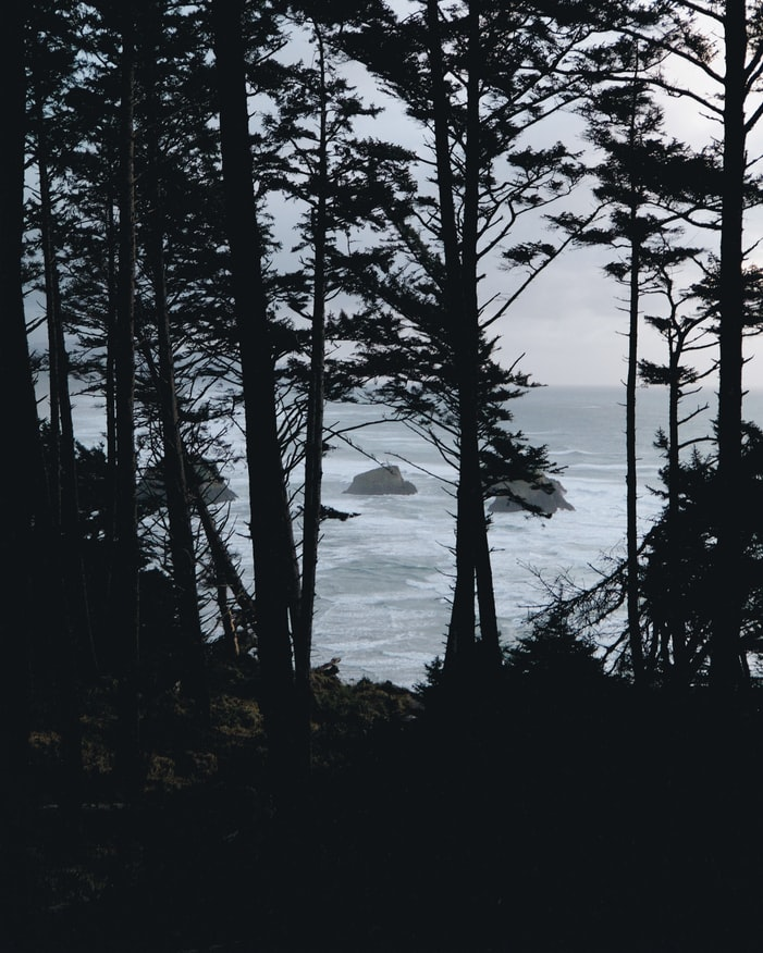 trees in front of the ocean