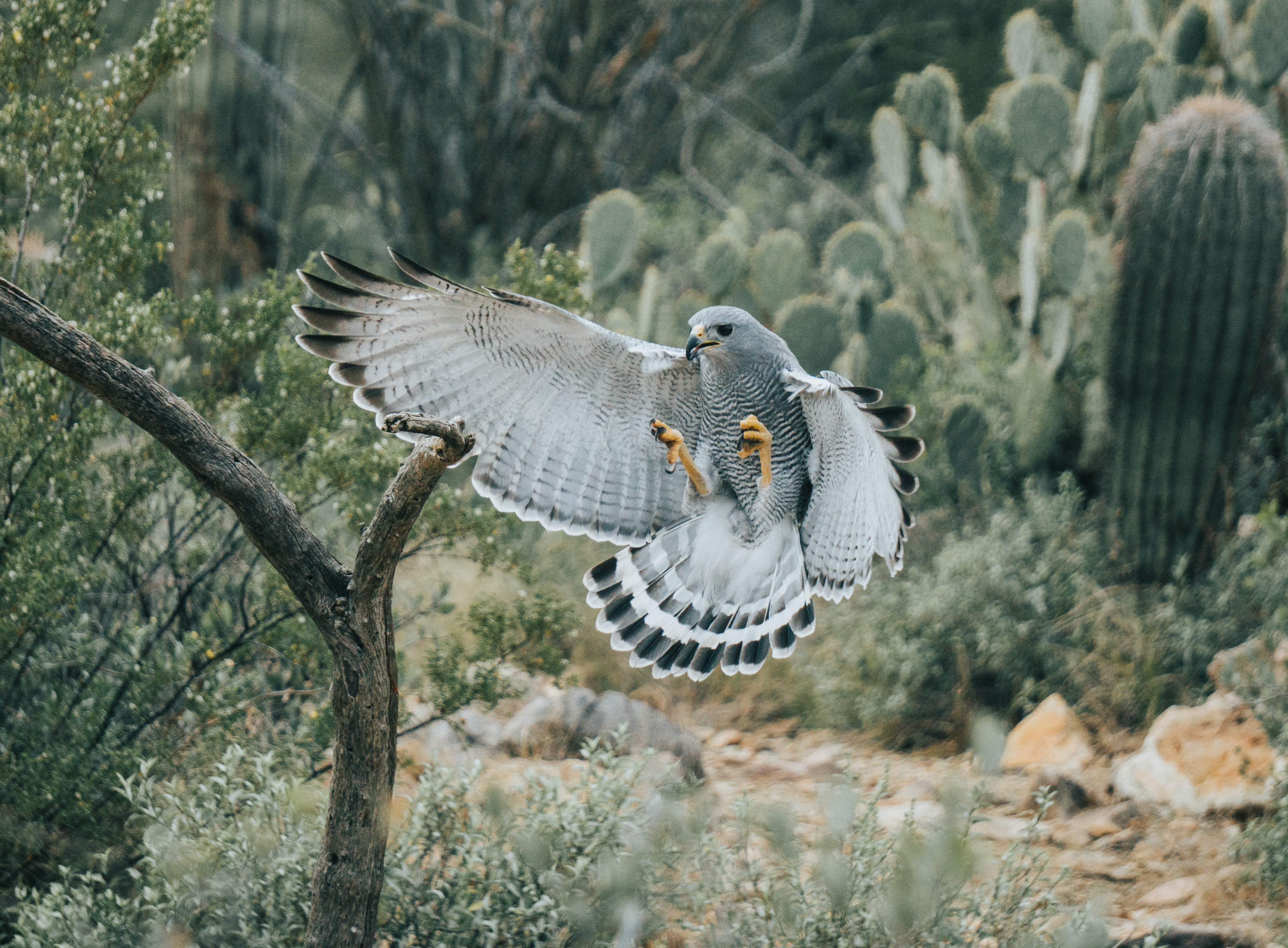 black and white bird flying near green cactus plants