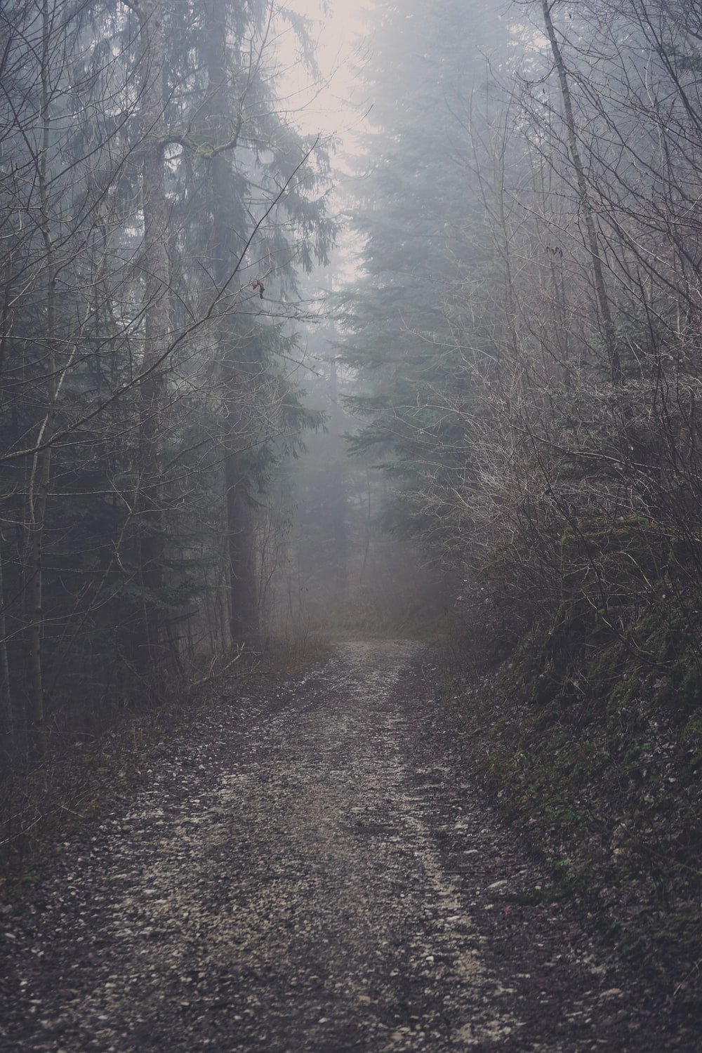 grey fog covering dirt trail in the middle of woods