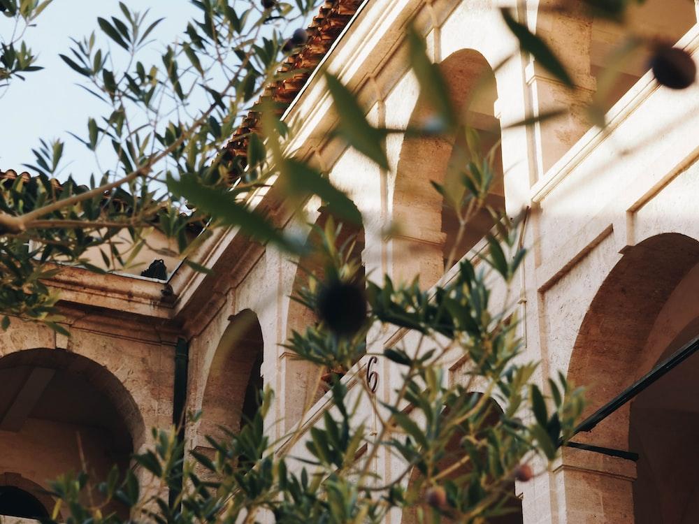 beige concrete building beside plant