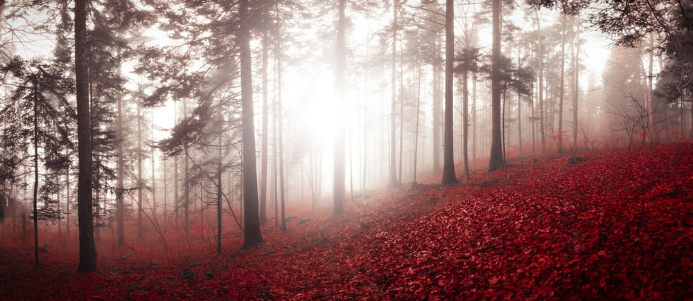 red fallen leaves covered ground during daytime