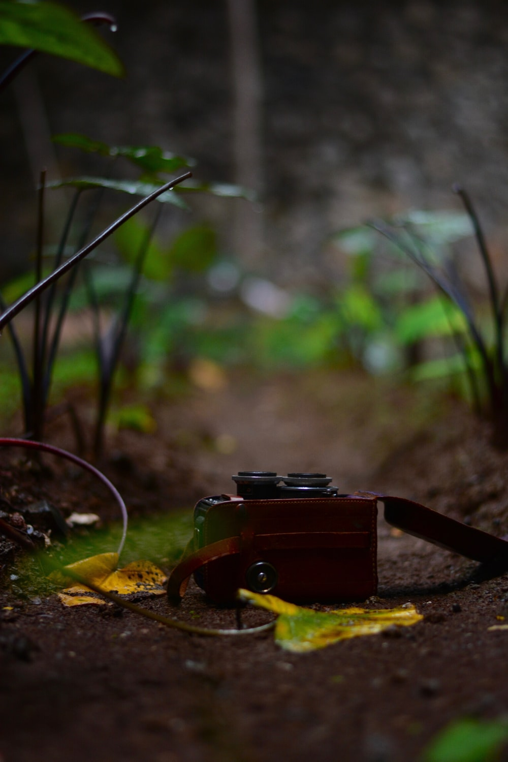 red camera on ground near green plants