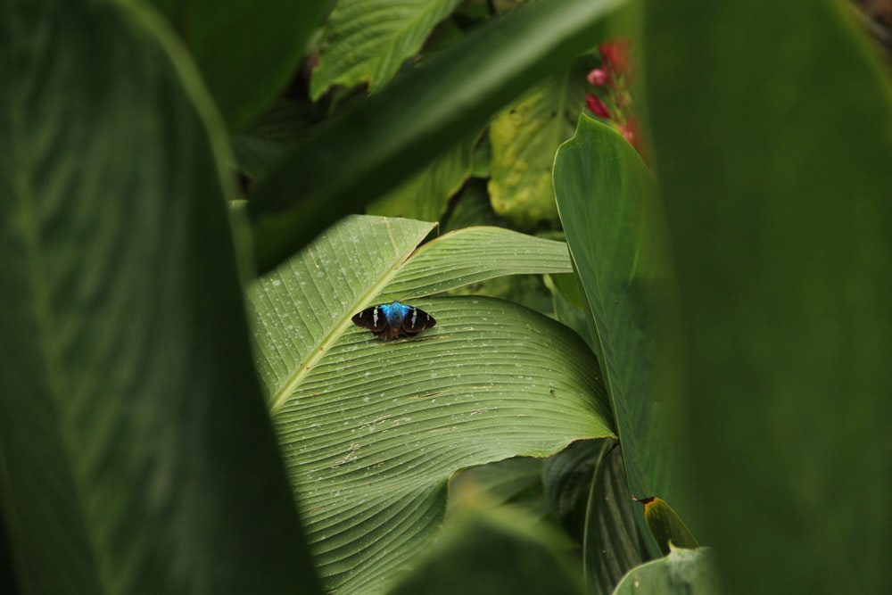 black and blue butterfly on green leaf
