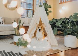 brown and white dog sitting under white hut