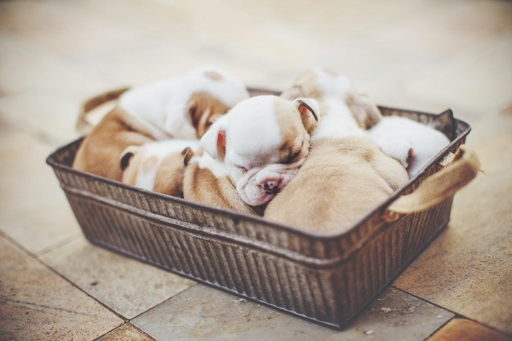 rectangular puppy litter on gray basin