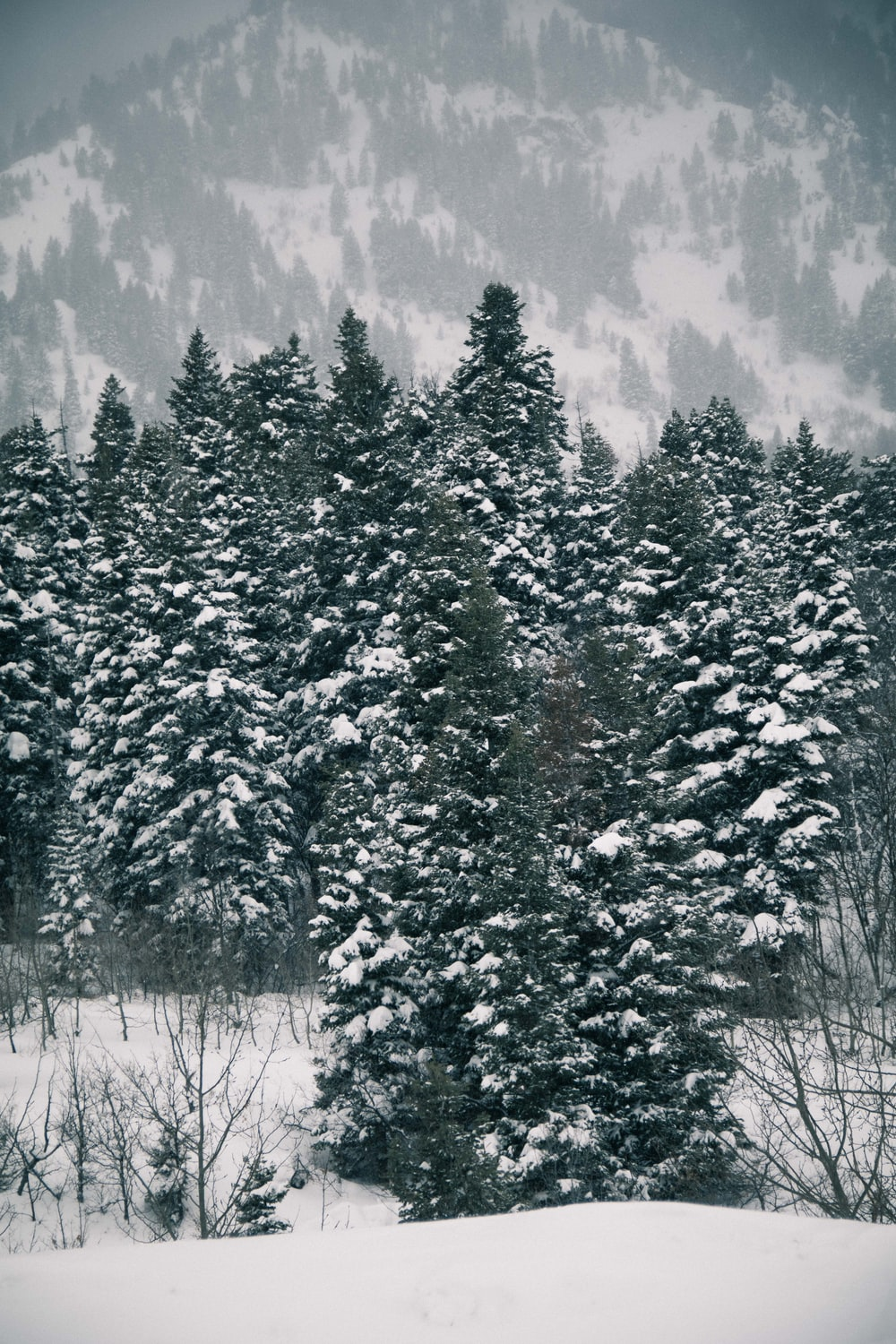 green leafed trees coated with snow during daytime