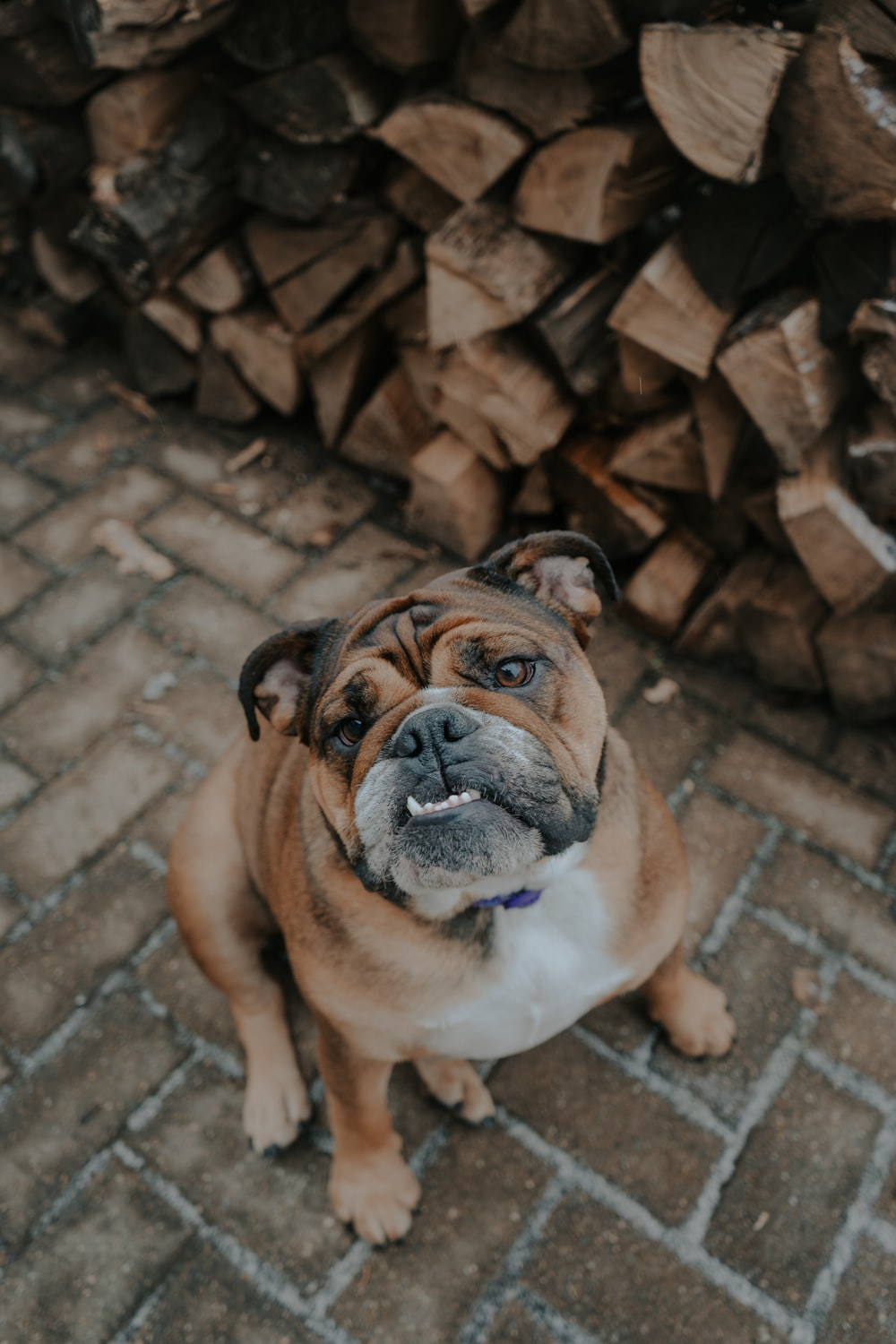 selective focus photography of brown dog sitting on floor beside firewood