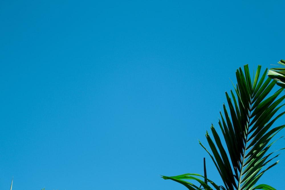 green palm plant