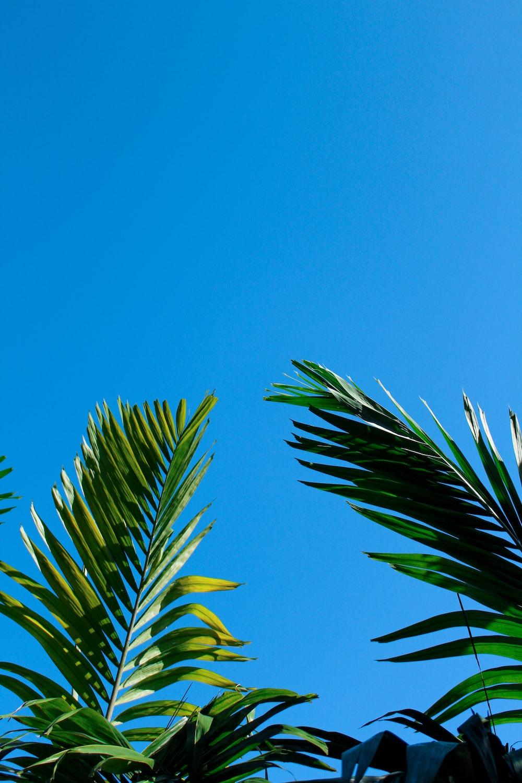green-leafed plant under blue sky