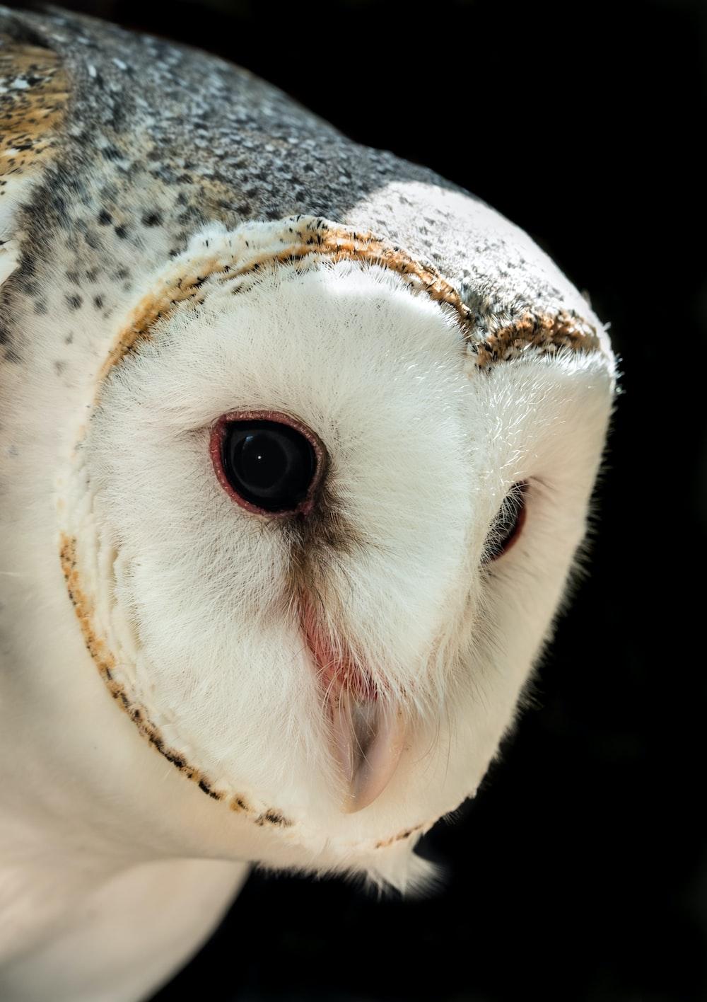shallow focus photo of barn owl