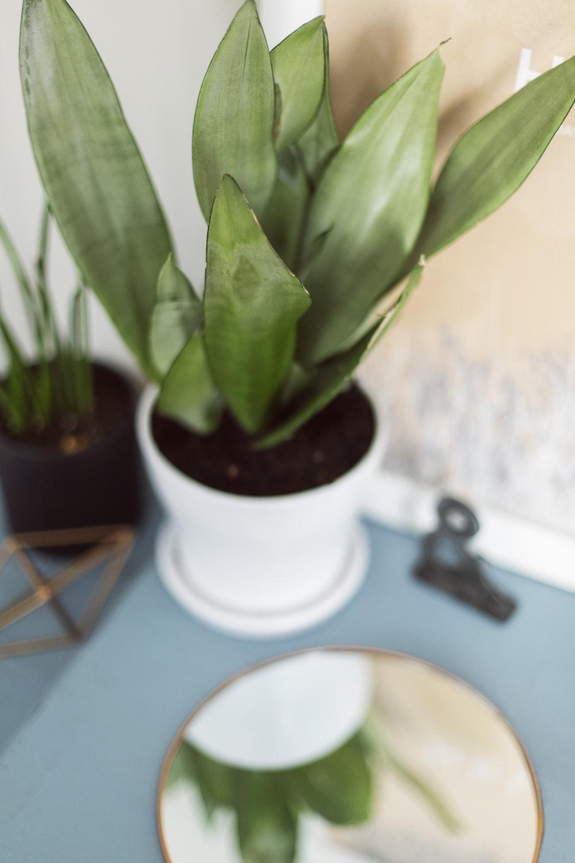 green-leafed plant on vase