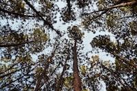 black and brown tree log