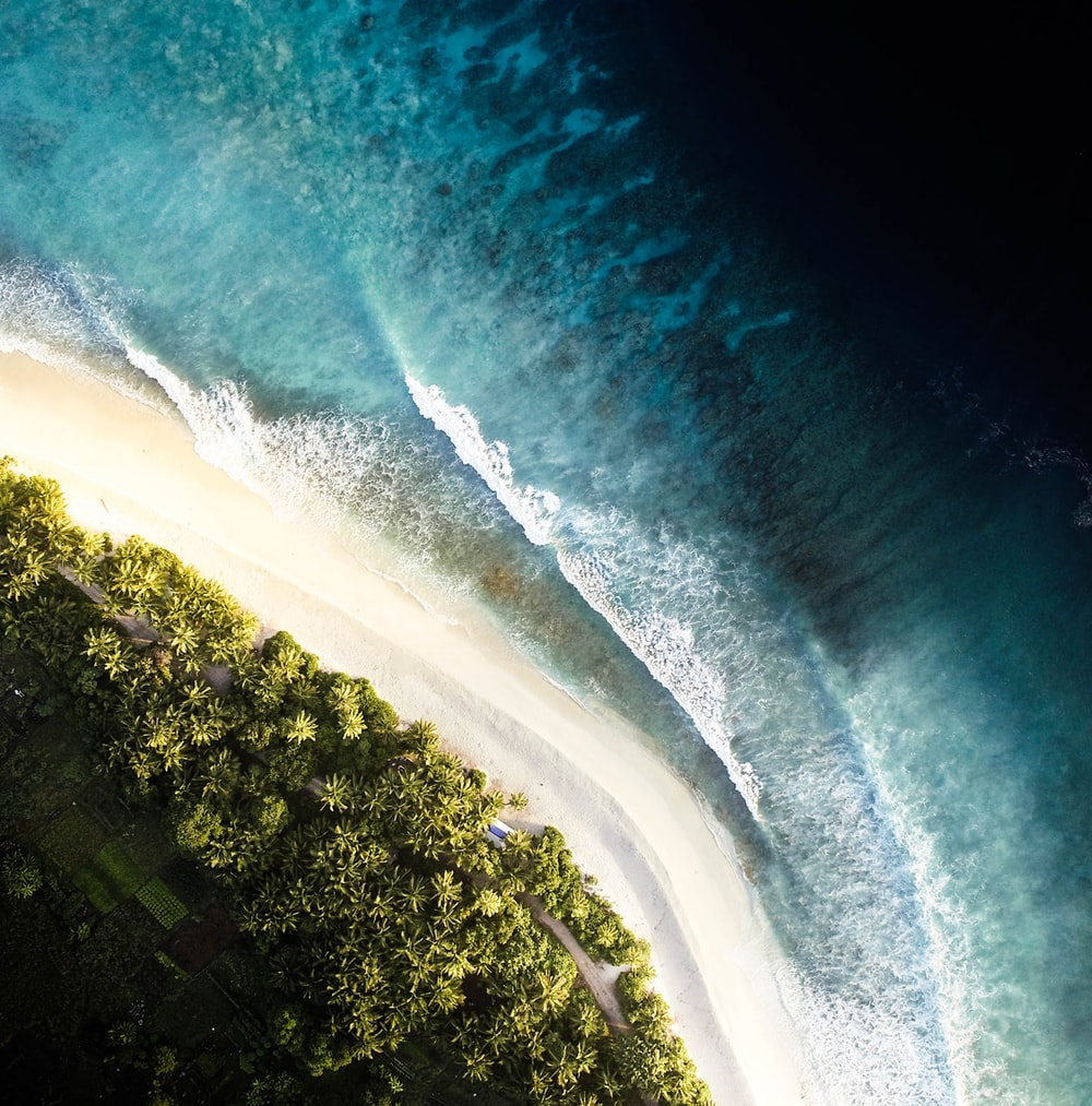 aerial view photography of sea and forest