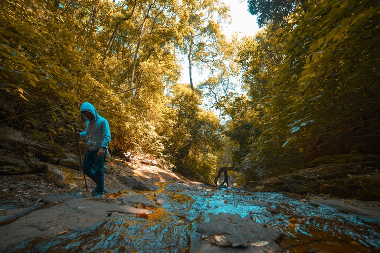 Forest treks of Wayanad