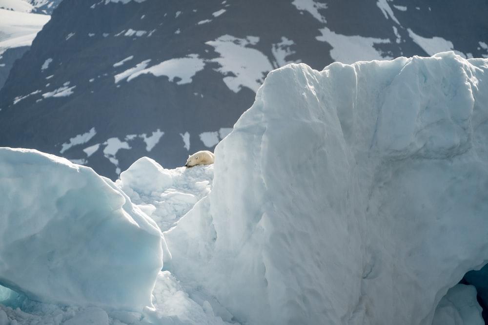 polar bear on top of glacier