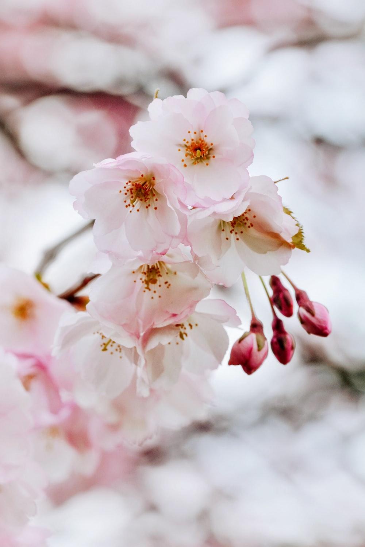 bokeh photography of white petaled flowere