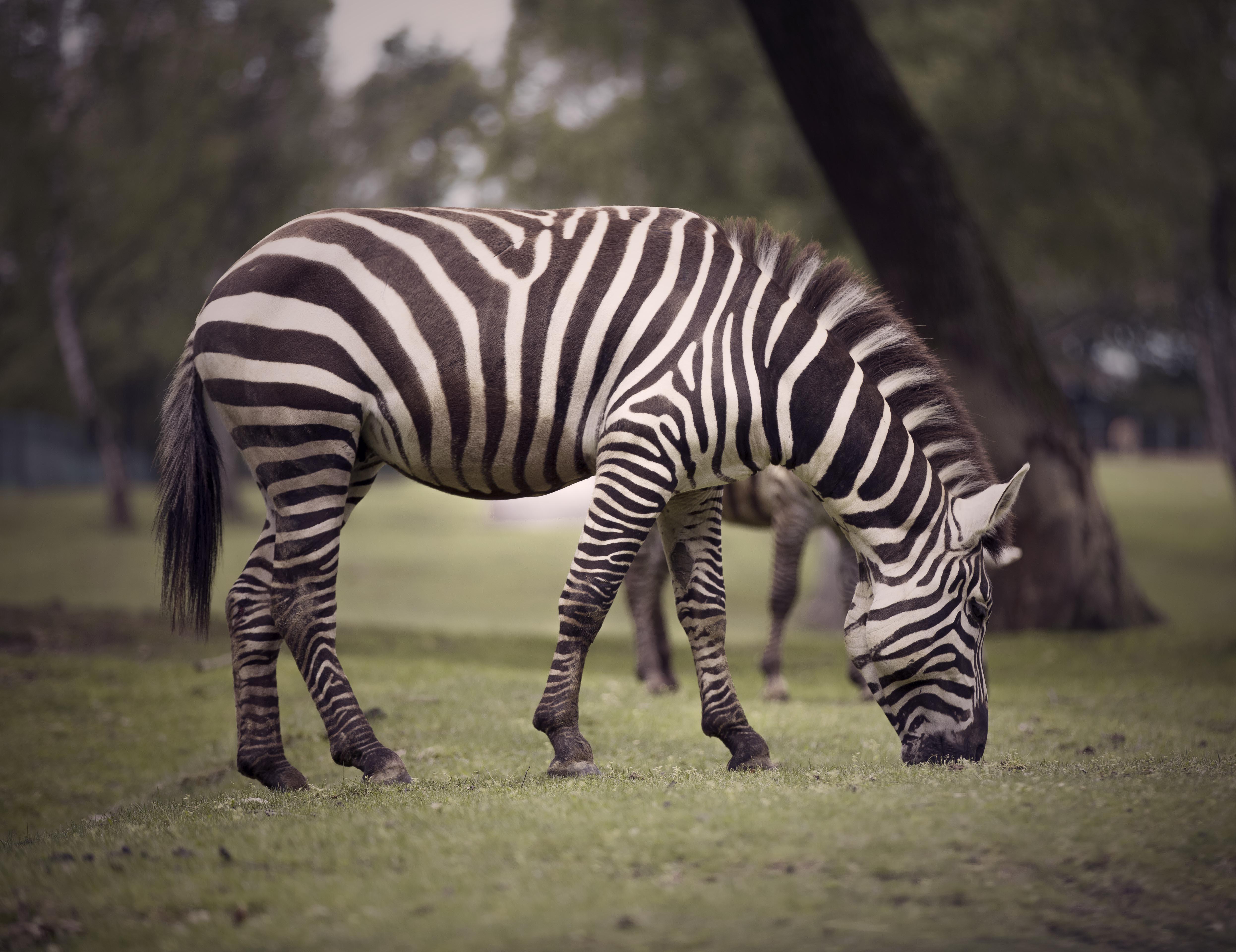black and white zebra print cat plush toy
