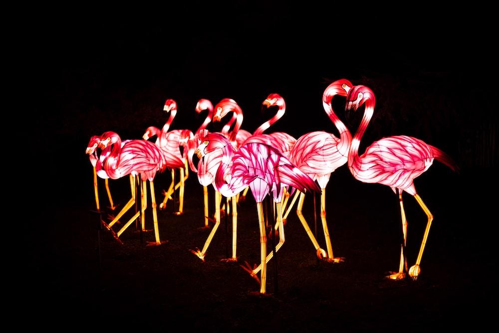 pink flamingo vector art
