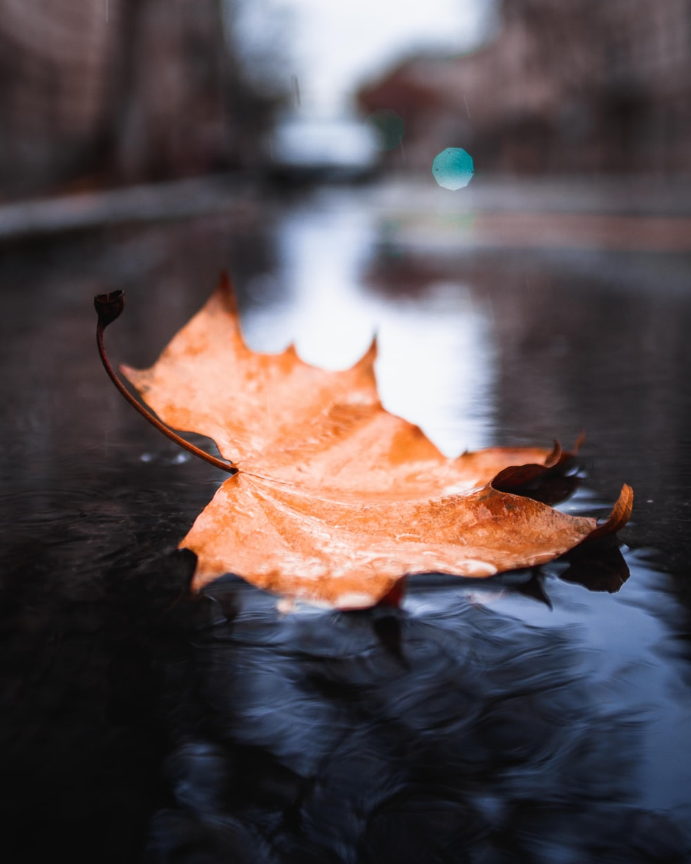 dried maple leaf on body of water