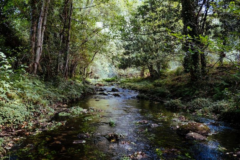 Cowhead Creek