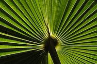green fern plant vector art