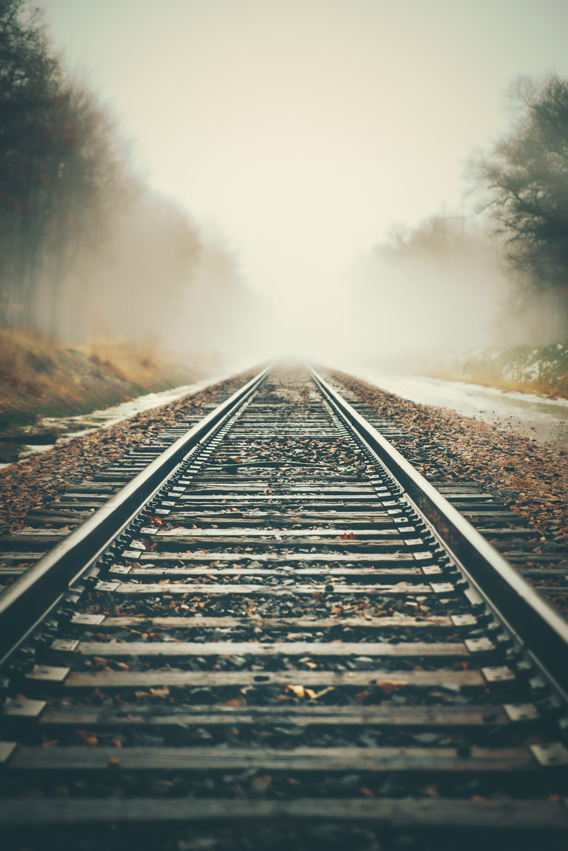 fogs covering trees on railways