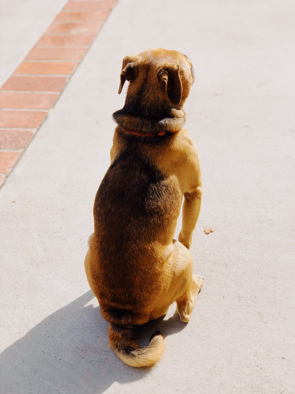 brown short-coated dog on white concrete road