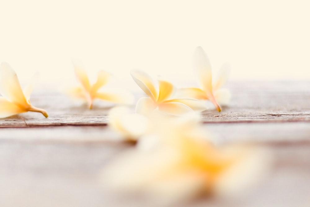 yellow petaled flower on dock
