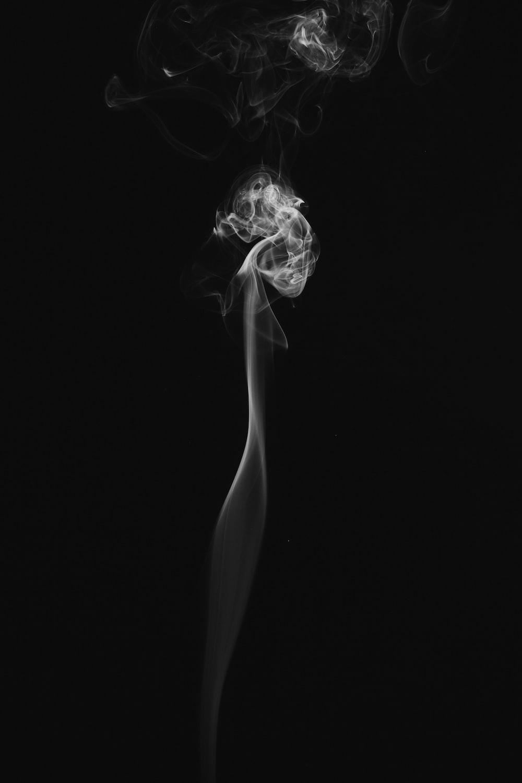 Smoke animal bird and smoking hd photo by damon lam dayday95