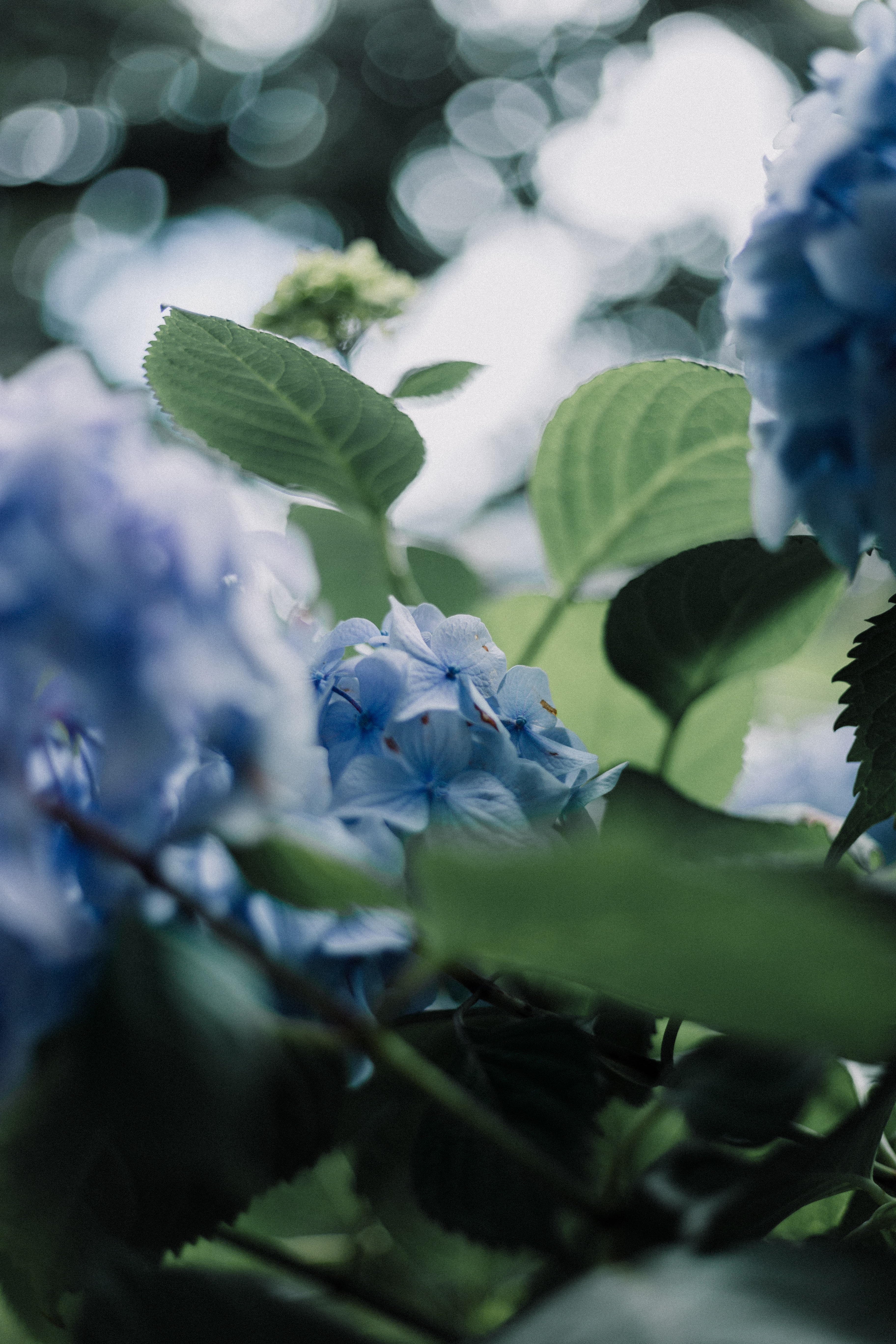 white and blue petaled flower