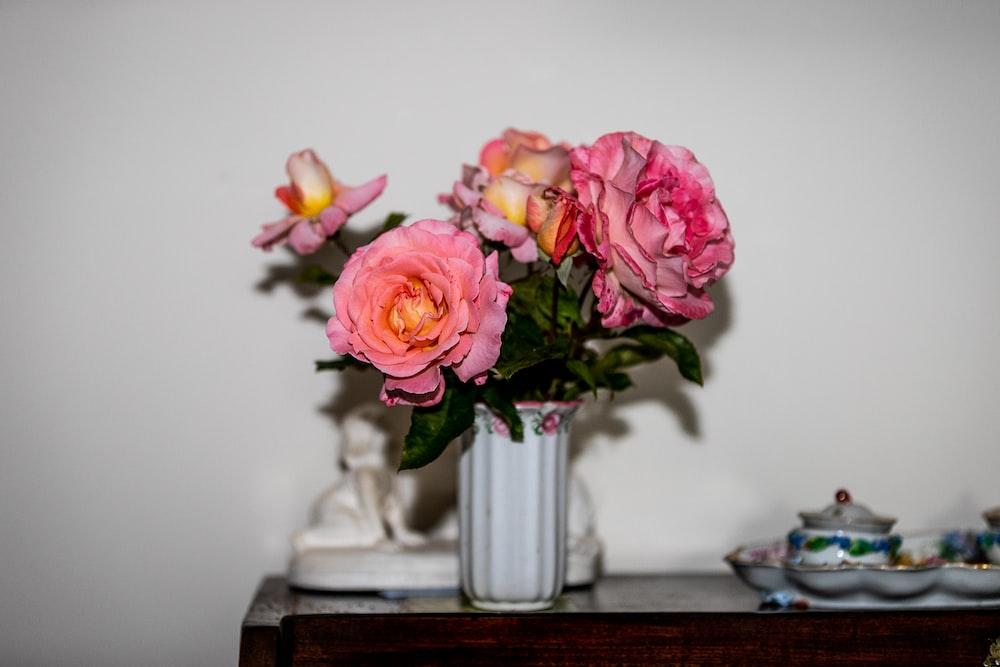 blooming pink roses in white vase