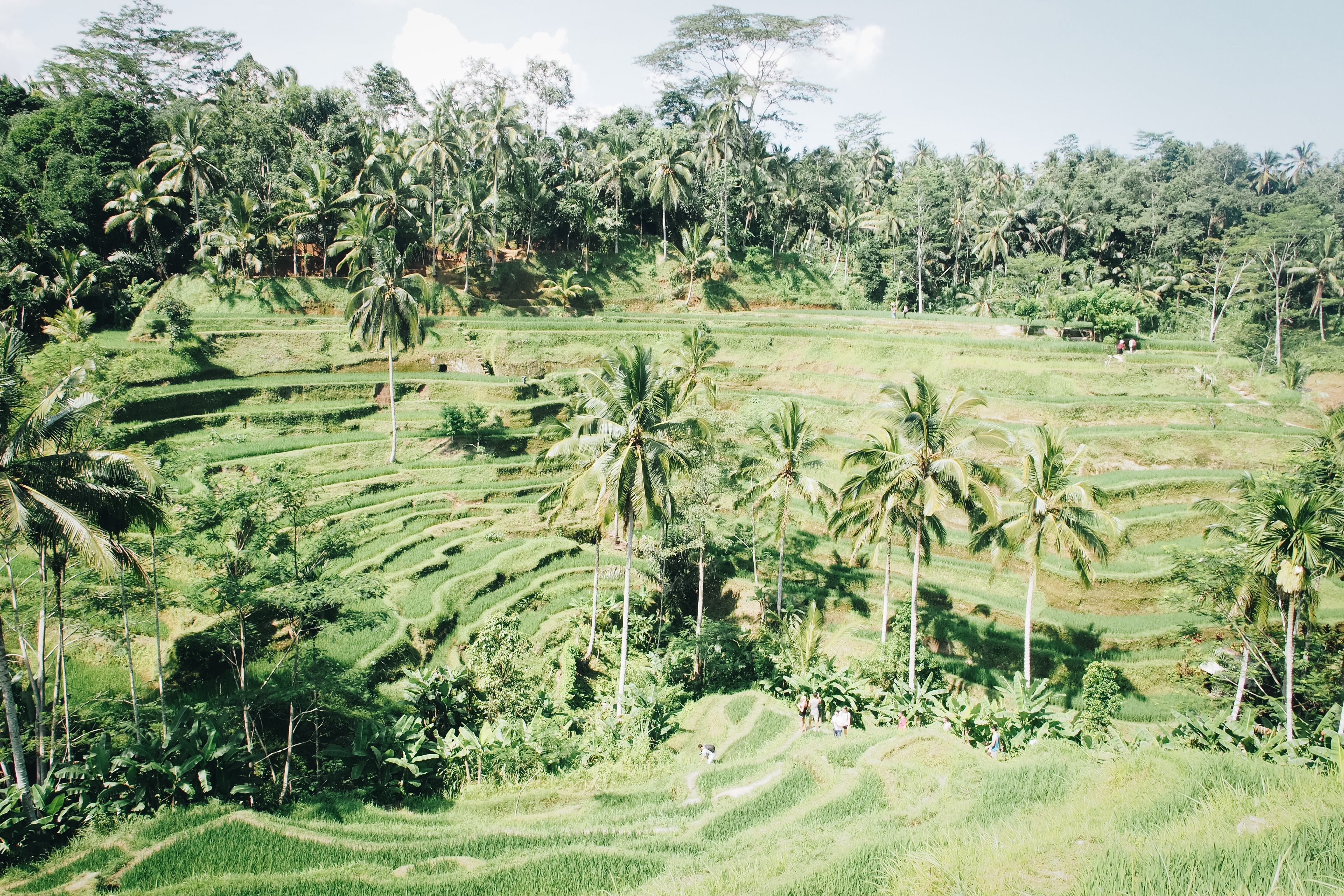aerial photography of green palm trees
